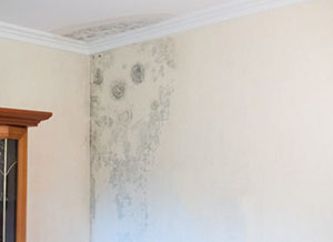 Damaged Drywall Repair in Westlake Village